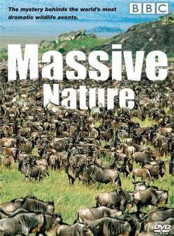 BBC群体大自然海报